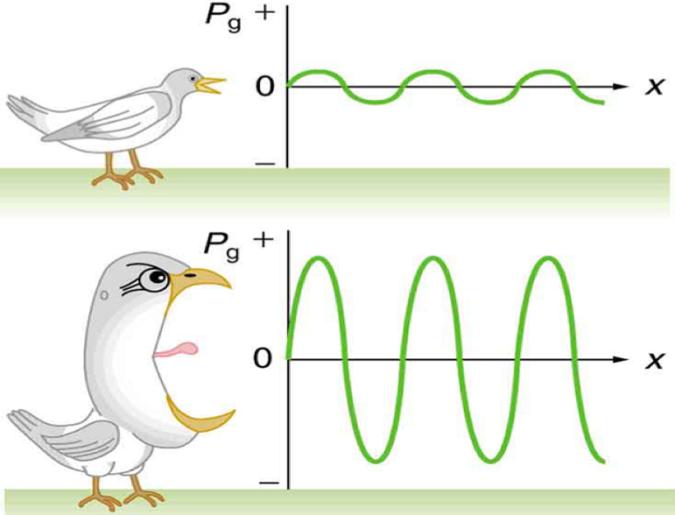 amplitude bird